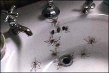 Alpha omega arachnophobia frank marshall 39199039 for Jeff daniels bathroom scene