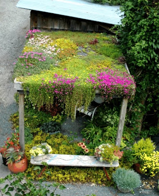 Living Roof and Raingarden Course at CCCC