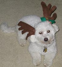 Got antlers ????