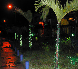 Christmas lights on palm trees