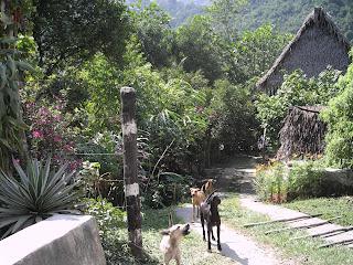 Rio Cangrejal road