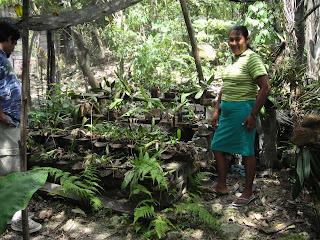 Orchid nursery, El Naranjo, Honduras