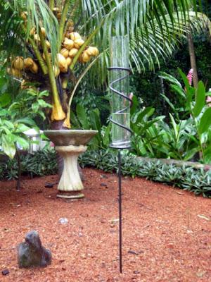 La Gringa's tropical-sized rain gauge, La Ceiba, Honduras