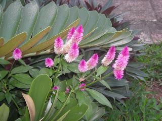 flowers, La Ceiba, Honduras