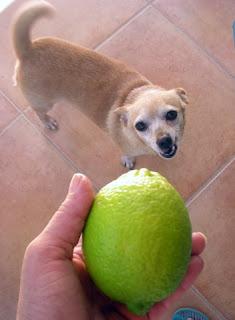 lemon, La Ceiba, Honduras