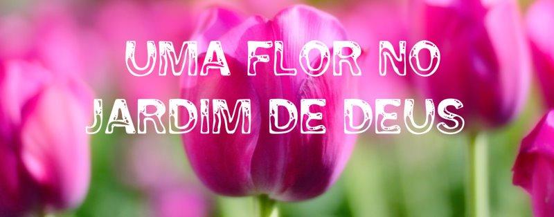 flores no jardim de deus : flores no jardim de deus:Apenas uma flor no jardim de DEUS