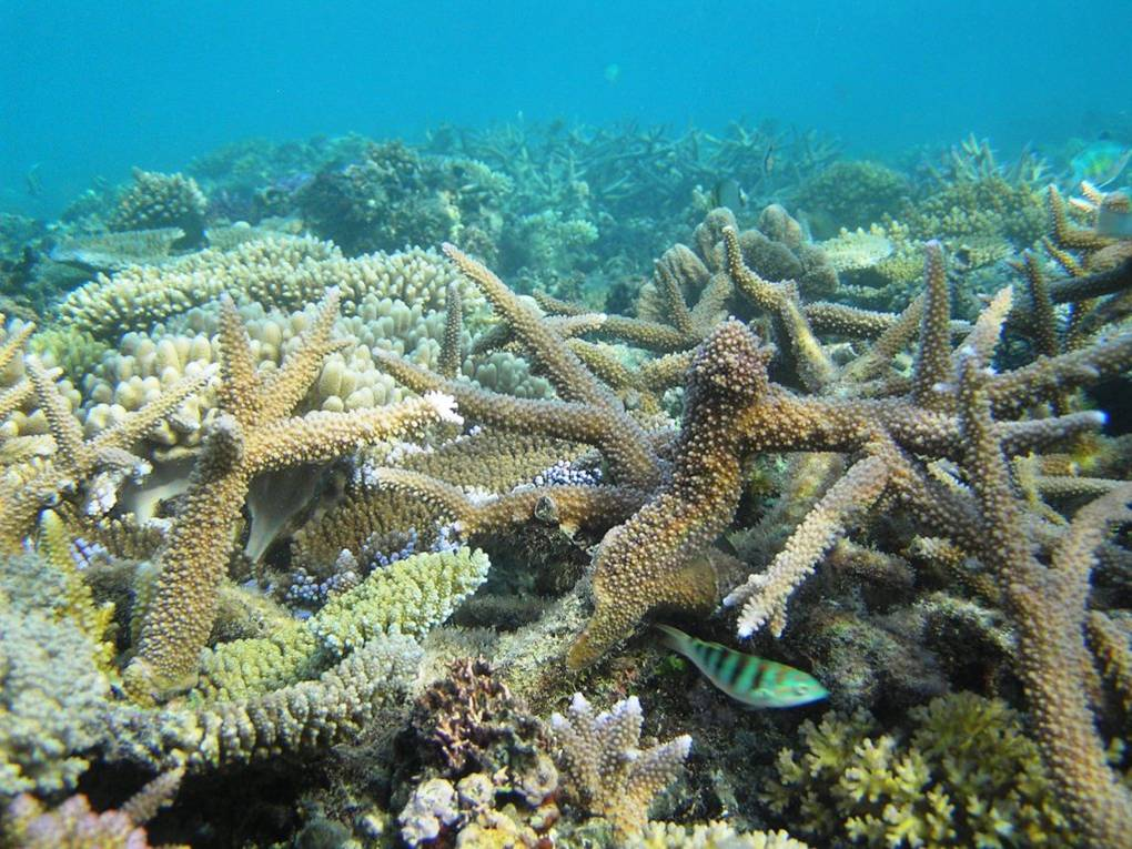 Coral Bleaching Comparison Of coral bleaching acrossCoral Bleaching Comparison