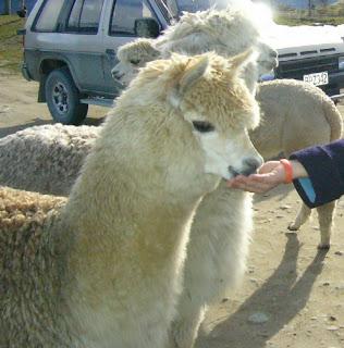 My New Zealand Vacation, Queenstown, Deer Park, Photo20595A