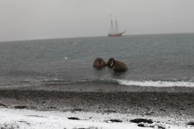 Walrus and Noorderlicht
