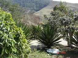NATUREZA - CONSERVATÓRIA - RJ