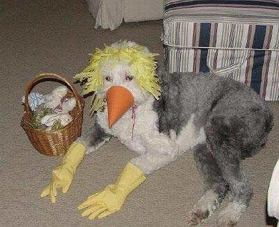 Cão fantasiado de algo que parece ser um pássaro.