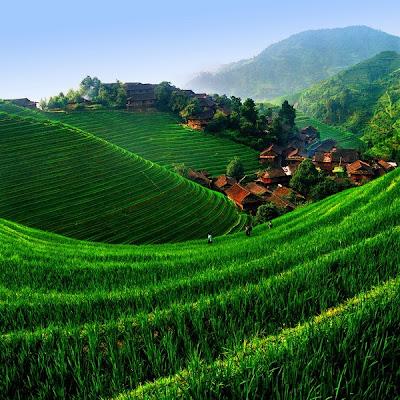 Plantação em pleno crescimento cobre os terraços e torna a montanha verdejante.