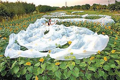 Vestido de Noiva com 200 metros de comprimento