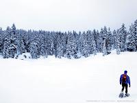 Paisagem de neve e árvores.