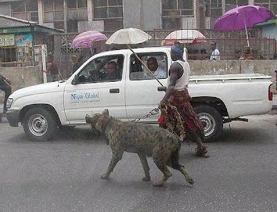 Homem nigeriano passeia com uma hienas na coleira.