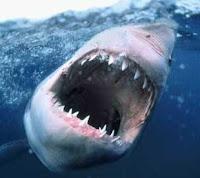 Tubarão é recepção em piada de argentino.