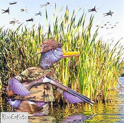 Pato caçando humanos em migração.