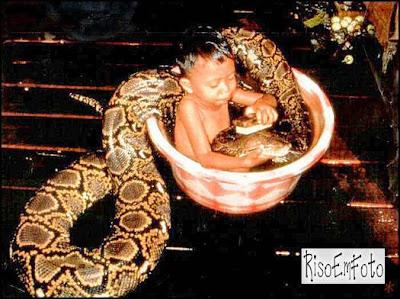 Criança pequena toma banho com uma cobra grande em uma bacia