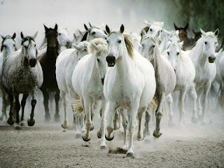 cavalo lenda arabe