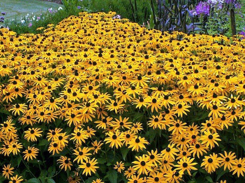 in) Foto Flores Bonitas Qual a Flor mais bela do Mundo?