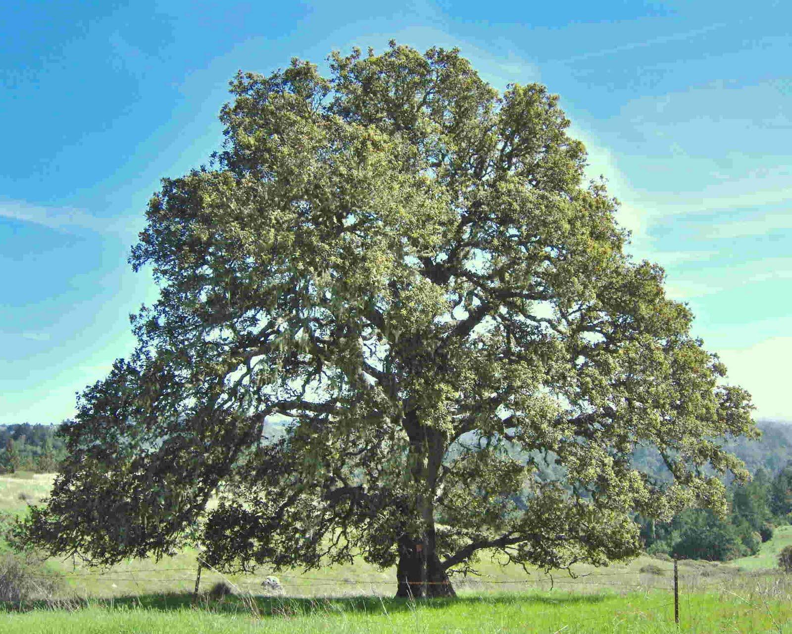 Фото дерев для дітей 9 фотография