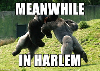 meanwhile in harlem