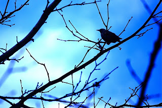 பாரதியின் கவிதைகள் : குயில் பாட்டு : குயிலின் காதற் கதை
