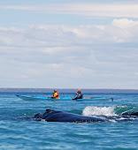 Our Sea Kayak Trips