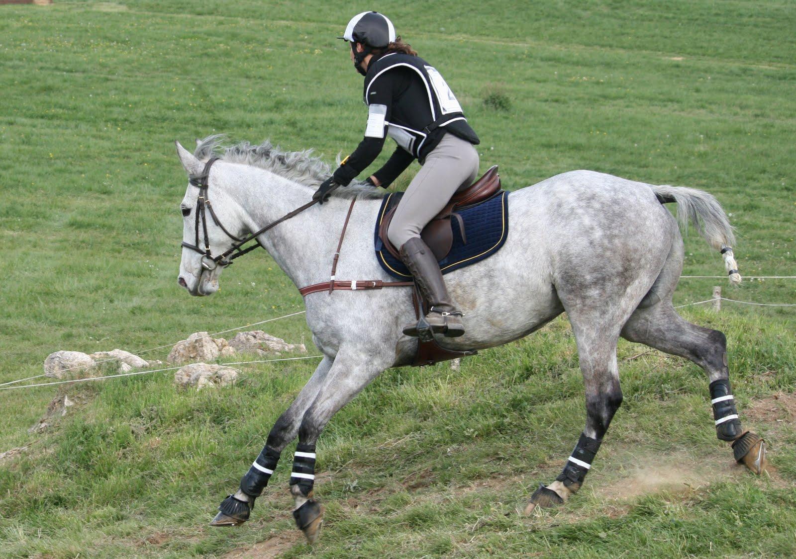 Photos souvenirs: Equitation CCE Tours