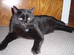 My cat, Basil