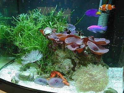 Tropical fish tank maintenance decorations 2017 fish for Aquarium decoration ideas freshwater