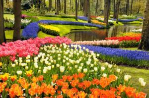 http://3.bp.blogspot.com/_7UBEh54FQ-0/S49Q6SDgjzI/AAAAAAAAAfs/4klNcjnUy_Q/s1600/Tulips.jpg