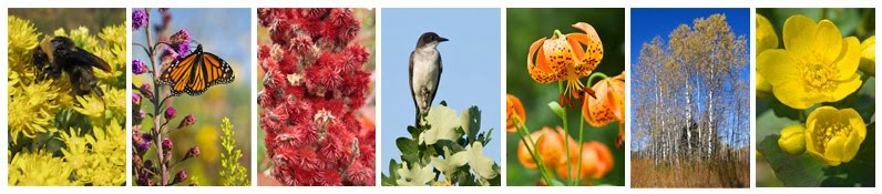 Native plants and pollinators