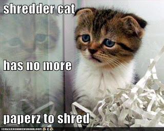 a cat shredding paper