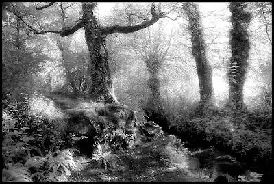 quand la forêt étend son voile d'ombre ...