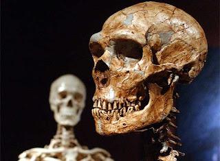 Reconstrucción de un esqueleto de neandertal