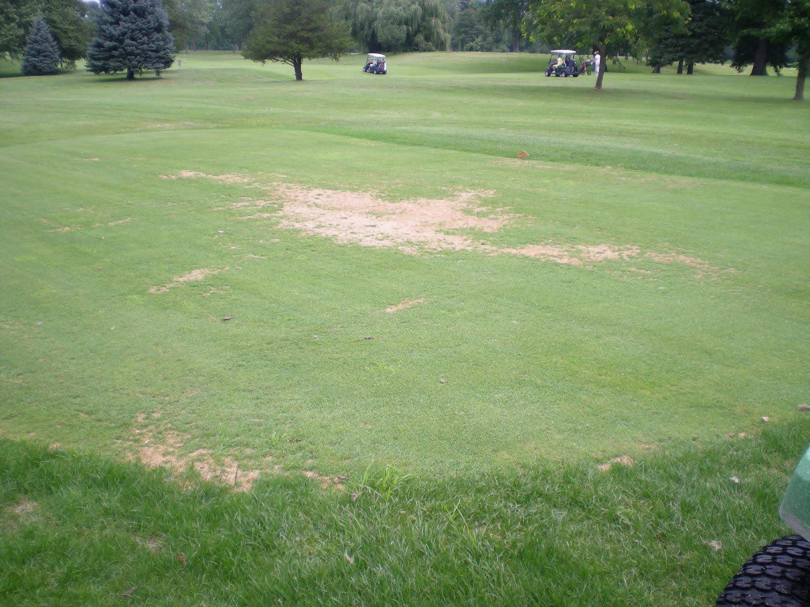 ridgeway country club turfgrass management  pythium blight