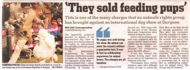 International Dog show in Gurgaon - a crime - OIPA