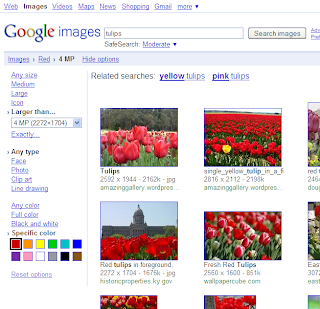 Search Options on Image Search