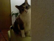 La gata más hermosa y psicópata del mundo