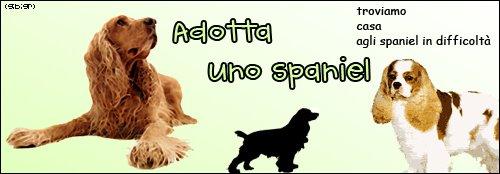 Adotta uno spaniel