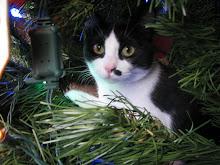 Anni at Christmas 2009