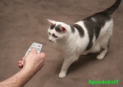Uzaktan Kedi kumandası