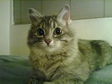 Gato demente