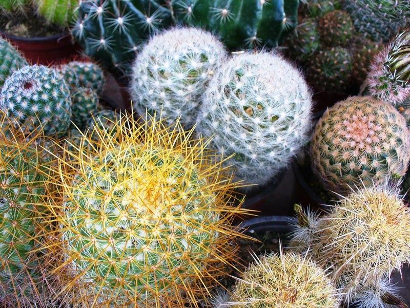 El opinador compulsivo vivero de cactus for Vivero de cactus en chile