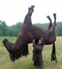 http://3.bp.blogspot.com/_7cGjsLFDwUE/TQwmPvcx8II/AAAAAAAABZs/a-wUPMEzsF0/s1600/horse+tired.jpg