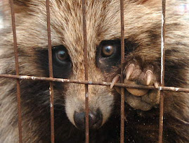 BOICOT Chinese Fur Farms