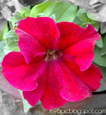 flower in n95 mobile,garden picture,free flower pictures,flower picture for gift,flower for love,love flower