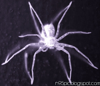 image of spider,spider on the wall,spider in n95 mobile,mobile photography,n95 pictures, effects on spider image