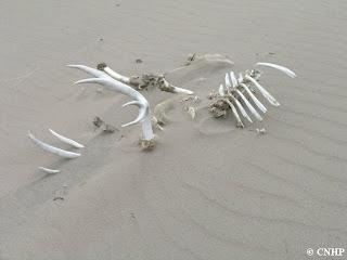 desert skeleton
